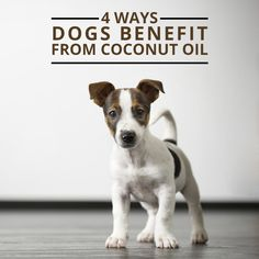 Ways Dogs Benefit from Coconut Oil 4 Ways Dogs Benefit from Coconut Oil - coconut oil is beneficial for dogs too! 4 Ways Dogs Benefit from Coconut Oil - coconut oil is beneficial for dogs too! Dog Care Tips, Pet Care, I Love Dogs, Puppy Love, Coconut Oil For Dogs, Oils For Dogs, Healthy Pets, Eating Healthy, Dog Teeth