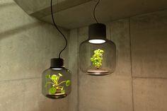 自我維持的生態系統可以讓你在窗口的空間生長的植物