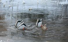 Winter Pictures, Birds, Nature, Animals, Winter Photos, Naturaleza, Animales, Animaux, Winter Images