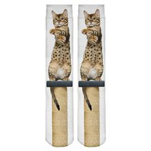 New High Quality Women Socks Funny 3D Full Print Sitting Cat Socks Style Fashion Casual Fitness Harajuku Hosiery     Tag a friend who would love this!     FREE Shipping Worldwide     Buy one here---> http://oneclickmarket.co.uk/products/new-high-quality-women-socks-funny-3d-full-print-sitting-cat-socks-style-fashion-casual-fitness-harajuku-hosiery/