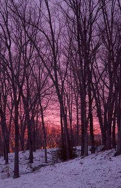 Winter Woods --- by cybersooz on Flickr