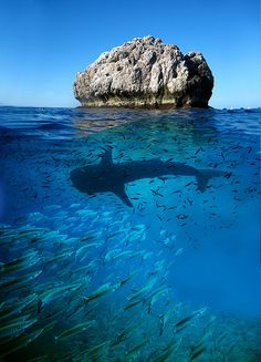 Sail Rock - Koh Phangan. I have dived this exact site twice | Follow Neonwanderlust