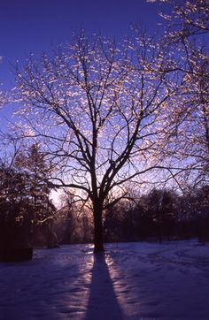 Remarkable Trees of Virginia Project - Tree Places