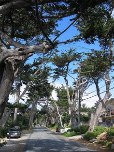 Carmel, California. One of my favorite spots in California. The streets are so quirky and charming.