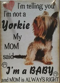 Puppy Care, Dog Care, Yorkie Haircuts, Dog Safety, Yorkshire Terrier Puppies, Yorkie Puppy, Dog Quotes, Cute Baby Animals, I Love Dogs