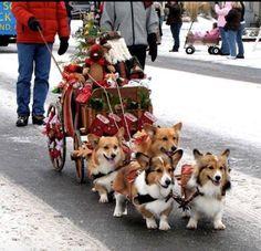 Corgi sleigh