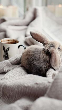 Soft fuzzy blanket with another soft and fuzzy creature. #blanky #bunny