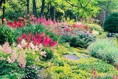Shade Gardens: endless summer hydrangeas, amethyst flower, and begonia !