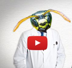 Zombie ants, zombie bees and zombie plants. These are just a few of the real walking dead found in nature. Watch this video to learn more about them. Happy Halloween.