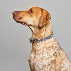 """Labrador retrievers, or """"Labs"""" as they've become fondly known, are one of the most popular dog breeds of our time. Pet Supply Stores, Most Popular Dog Breeds, Large Animals, Chocolate, Dog Friends, Dog Love, Animal Rescue, Cute Dogs, Pet Supplies"""