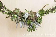 Create a focal point for your succulent garland - Succulents and Sunshine