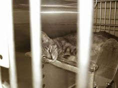 Rescued! Cats & kittens impounded at the Los Angeles County facility in Downey, California: Downey CA: MAMA CLARA & BABY ELOISE - SUPER SWEET ...