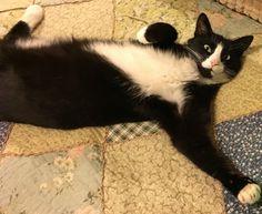 Томас расслабляется посреди рабочей недели.