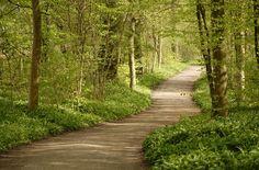 Η φύση το πράσινο τα δέντρα ειναι ωραίο να το βλέπεις!