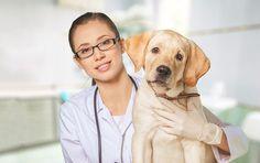 Em sua estreia no blog da Adorável Criatura, Sergio Lobato fala sobre a importância das rotinas administrativas para clínicas veterinárias e dá dicas de como implementar essas boas práticas