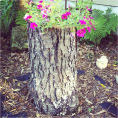 Hollow tree log flower pot! My mother Farra's idea around the house!