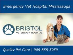 Bristol Veterinary Clinic in Mississauga providing high quality pet care and extraordinary customer services. Our doctors consider every client and every pet as the part of our family. We realize the emergency conditions of your pet so we open our treatment services 24/7 hours and seven days a week. Veterinary Services, Veterinary Care, Emergency Vet, Vet Clinics, Pet Health, 7 Hours, Pet Care, Doctors, Bristol