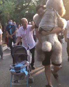 I Don't Like To Do Walk 😆 - Besser geht net - Animals Funny Animal Videos, Cute Funny Animals, Cute Baby Animals, Funny Dogs, Animals And Pets, Cute Puppies, Cute Dogs, Cute Gif, I Love Dogs