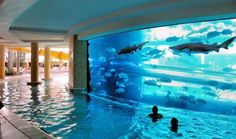 swimming with sharks? or fishes? i wanna do it! but i'm probably gonna cry if that tank breaks..