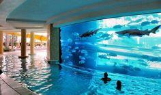 coolest pool ever - Imgur (aquarium,shark,pool,slide,awesome)