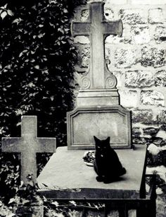 Black cat on grave