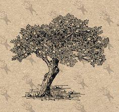 Vintage Image Apple Tree Instant Download Digital by UnoPrint