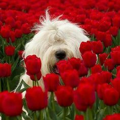 Red thingsd that dog is white ok i am tired so goodnight