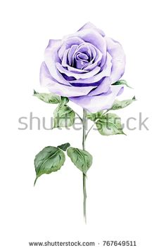 Find Watercolor Illustration Hand Painted Violet Rose stock images in HD and millions of other royalty-free stock photos, illustrations and vectors in the Shutterstock collection. Thousands of new, high-quality pictures added every day. Watercolor Illustration, Digital Illustration, Watercolor Paintings, Watercolor Rose, Diy Art, Vector Art, Royalty Free Stock Photos, Hand Painted, Backgrounds