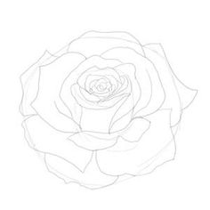 how to draw a rose sketch