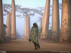 Madagascar among the ancient baobabs. By (© Ken Thorne)