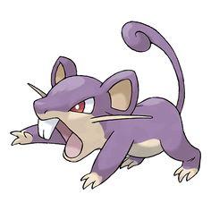 Rattata #019