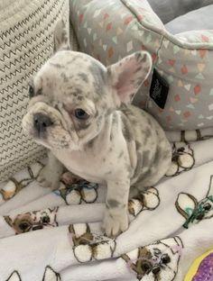 Baby Animals Super Cute, Super Cute Puppies, Cute Little Puppies, Cute Little Animals, Cute Dogs And Puppies, Baby Puppies, Cute Funny Animals, Baby Dogs, Doggies
