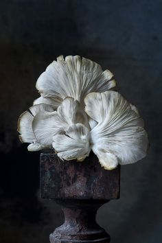 Fine Art/ The Pedestal Series - Lynn Karlin Photography Still Life Photography, Fine Art Photography, Fruit Photography, Photography Series, Fungi, Vegetables Photography, Vegetable Carving, Mushroom Art, Still Life Photos