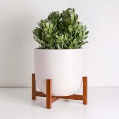 Costa Farms Pilea Peperomioides Sharing Plant in 6 in. Contemporary Planter-6PILEACONTEMP - The Home Depot Small Indoor Plants, Indoor Trees, Indoor Planters, Ceramic Planters, Planter Pots, Smooth Hydrangea, Contemporary Planters, Wooden Plant Stands, Bamboo Fence