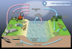 simple explanation of carbon cycle