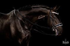 We are in LOVE with the BR Double Bridle Swindon shown here in this gorgeous photo by BR Equestrian Equipment. Get yours in store now at www.ridersxoxo.com