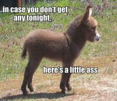 In case you dont get any tonight funny memes meme lol funny animals dirty jokes. Funny Animal Memes, Funny Animal Pictures, Funny Images, Funny Animals, Funny Jokes, Memes Humor, Funny Pics, Sarcastic Humor, Animal Pics