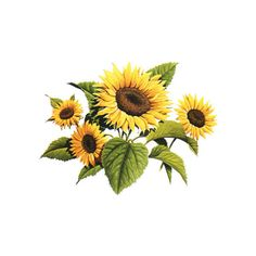 PaganPages.org sunflower ❤ liked on Polyvore featuring flowers, backgrounds, sunflowers and yellow