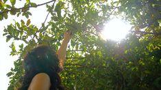 Adán y Eva no hicieron caso a la orden de Dios. Sucumbieron a la tentación de Satanás y comieron del árbol del conocimiento del bien y del mal. #Evangelio #Dios #Coro #MúsicaCoral #Música #ElCoroDelEvangelio #Destino #Vida #Documental #Musical #Canción #Videos #universo #Historia #astronómico #Astronomía