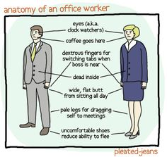 Anatomy Of An Office Worker