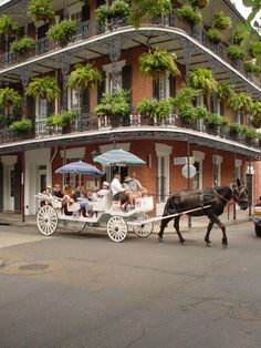After four years of living in New Orleans, this is still on my bucket list
