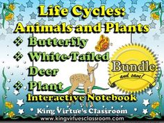 Life Cycles: Interactive Notebook BUNDLE - White-Tailed Deer, Butterfly, and Plants - King Virtue's Classroom  **Note a preview will be added within 24 hours!!!   This Life Cycles Interactive Notebook covers the following:  * investigate and understand that plants and animals undergo a series of orderly changes as they mature and grow * animal life cycles * plant life cycles  Perfect for your Life Cycles unit!