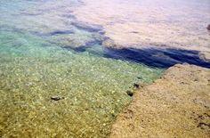 Nuotare coi pesci 2