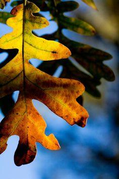 Fall foliage Ruidoso