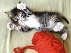 Want this kitty