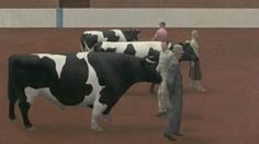 The 1955 painting by Alex Colville called Cattle Show.
