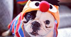 18 Instagram Pups Ready to Trick-or-Treat #halloween