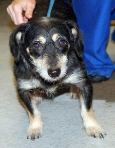 Nanette: Beautiful terrier mix with the saddest eyes out of time at SC shelter