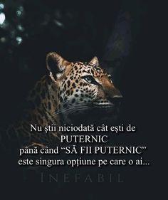 Capricorn, Panther, Animals, Animales, Animaux, Panthers, Animal, Animais, Capricorn Sign