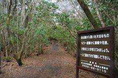 Suicide Forest, Japan